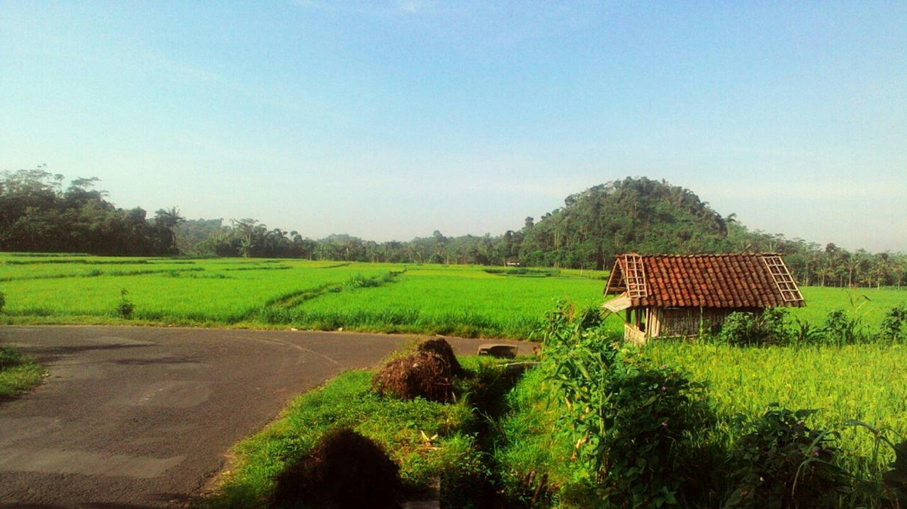 field, landscape, tranquility, tranquil scene, tree, no people, nature, scenics, agriculture, beauty in nature, day, outdoors, green color, growth, rural scene, grass, sky, clear sky, architecture