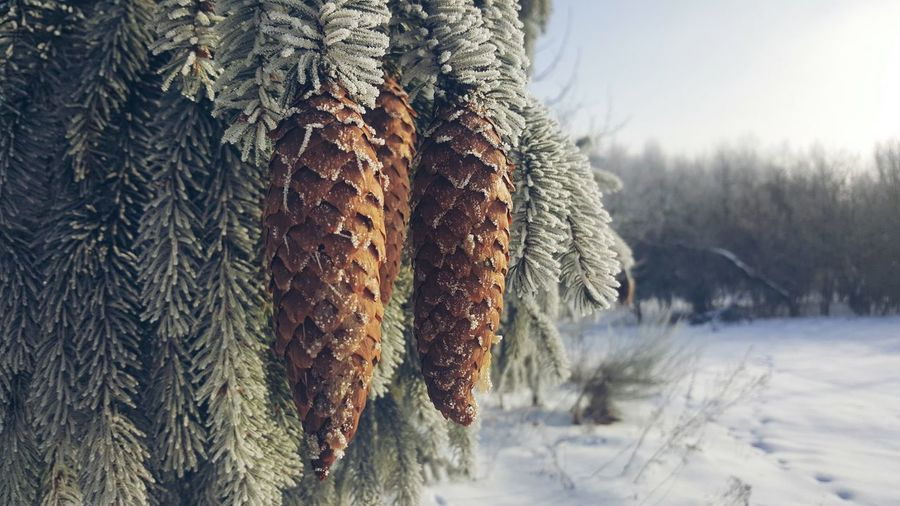 Winter Cold Temperature Beauty In Nature Nature Snow Warm Clothing Tree Close-up StillLifePhotography Nature Photography No People Focus On Foreground Winterwonderland Winter Morning