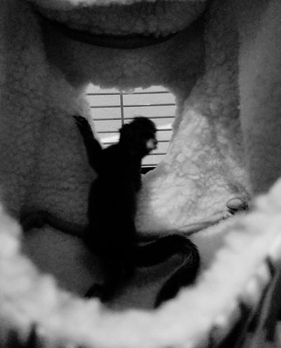 Exploration One Animal Pets Curiosity Looking Mammal Baby Squirrel New Home Rehabilitation Soft Foster Pet Rory