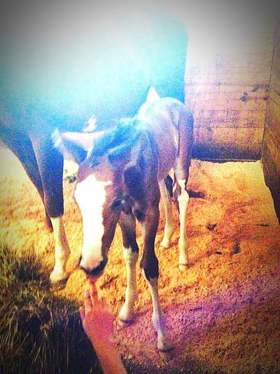 Hello World Springtime Oh Hi There  Foals Foals !