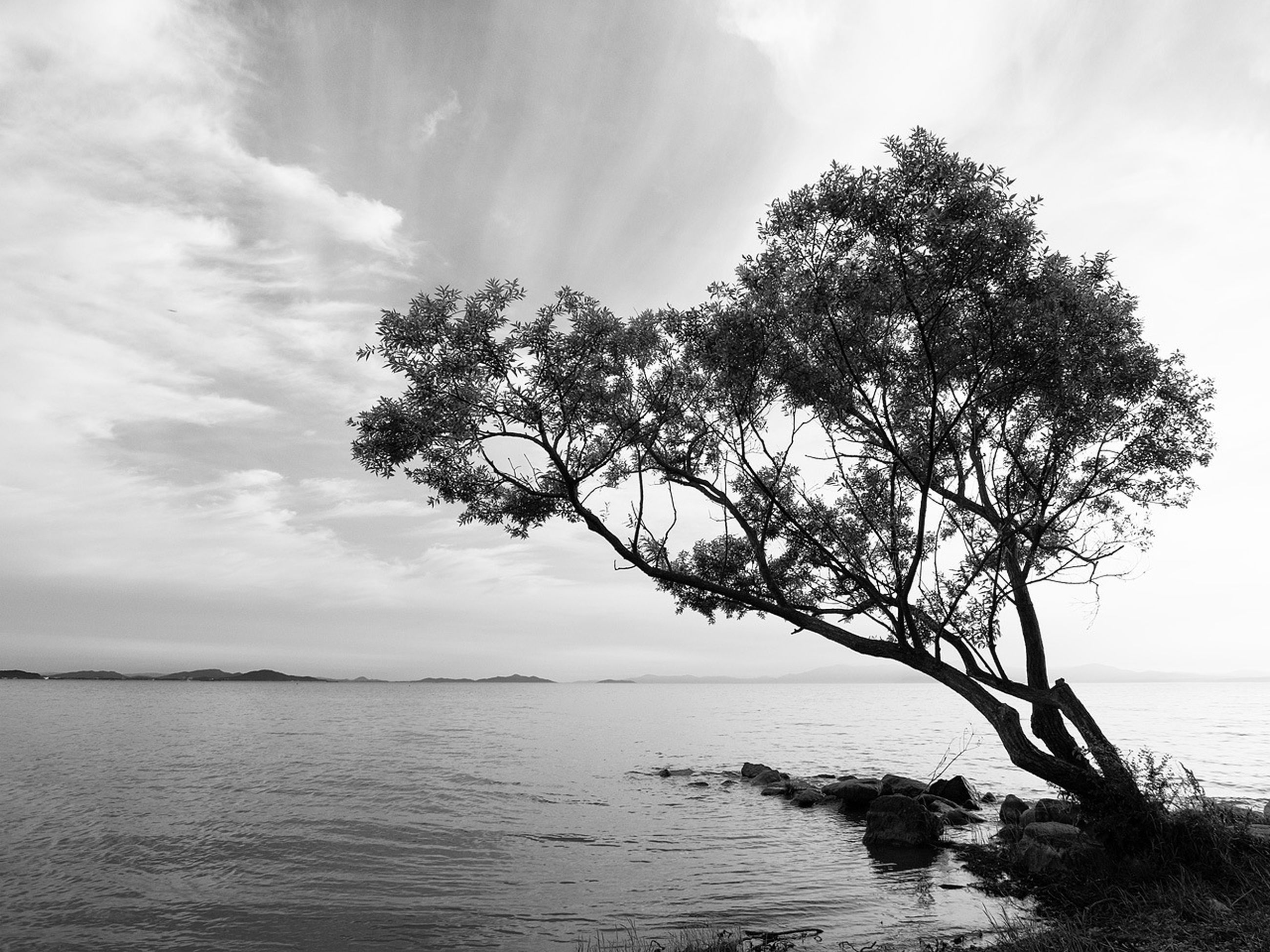 sea, sky, water, tree, horizon over water, tranquility, tranquil scene, scenics, beauty in nature, nature, branch, cloud - sky, cloud, tree trunk, idyllic, growth, outdoors, no people, cloudy, beach