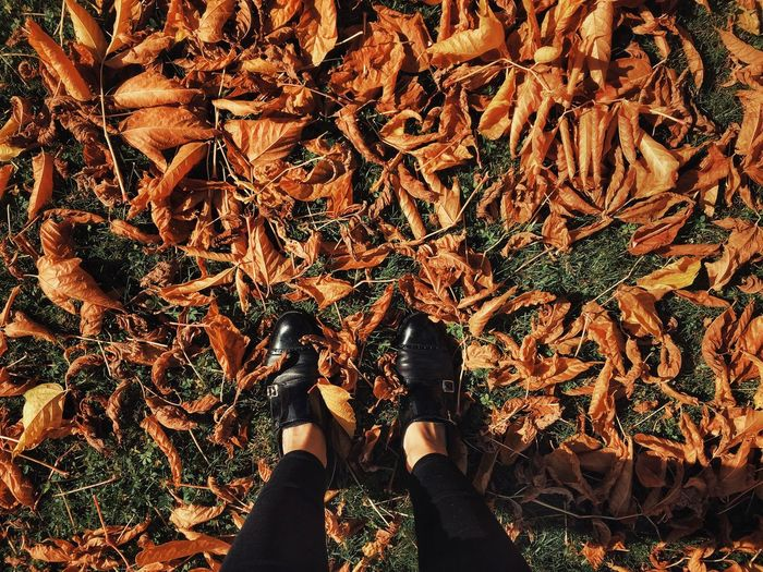Low Section Of Person Standing Amidst Autumn Leaves On Field