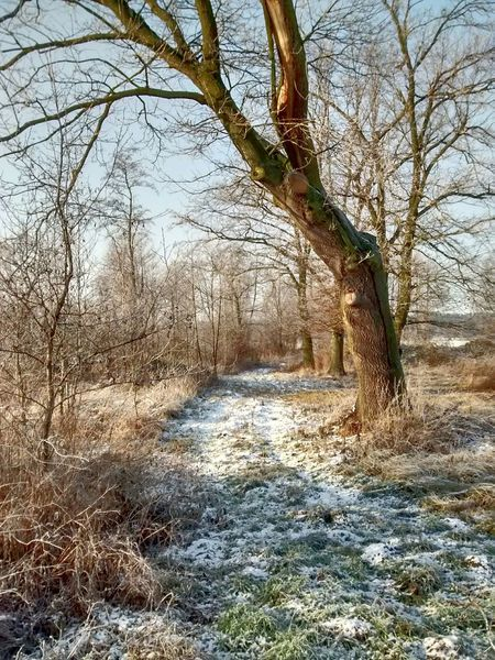 Winter Winter Wonderland Winter Trees Nature Nature_collection EyeEm Nature Lover Beauty Trees Hugging A Tree Snow