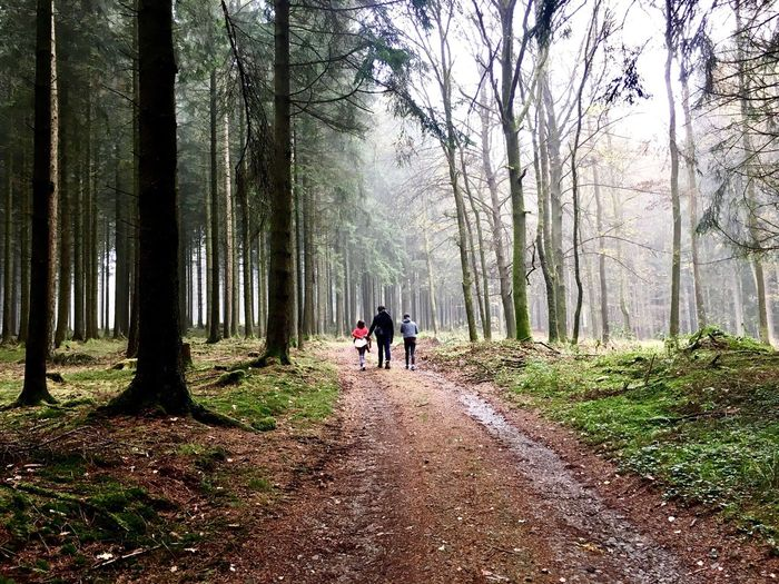 Rear view of people walking on road in forest
