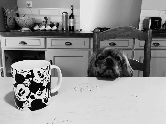 My Favorite Breakfast Moment Blackandwhite Noir Et Blanc Blancoynegro Cavalier King Charles Spaniel Chien Dog Dogs Dogslife Pet Portraits