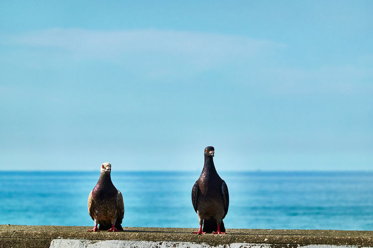Birds perching on the sea shore against sky