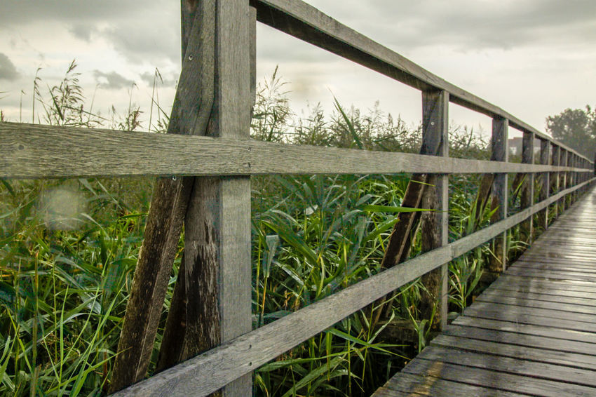 Raining UNESCO Welterbe We Bar Bridge Bridge - Man Made Structure Cane Close-up Day Feedersee Jetty Nature No People Reed Wood - Material