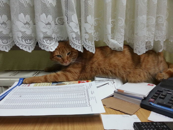Cat Relaxing On Books At Desk