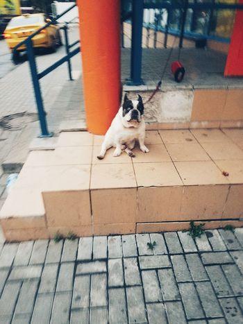 Dog Batman. wait . One Animal Pets Domestic Animals Domestic Cat Mammal Day Outdoors No People Feline Bird Nature