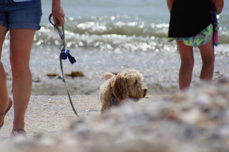 A dog out for a walk on the beach with a lead. Focus on the Story Selective Focus Close-up High Angle View vanishing point Motion Waves Water Animal Head  Animal Body Part Leisure Activity Human Leg EyeEm Selects Canine Pets Domestic Domestic Animals Dog Mammal Animal Themes Animal One Animal Vertebrate Pet Owner Human Body Part Lifestyles Real People Sea Beach Land
