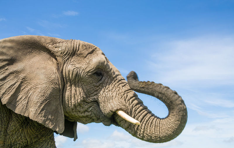 Close-up of elephant against sky