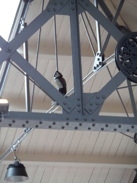 Animal Theme. Artificial. Bird. Creature. Girders, Grey Girders. Grey. Owl In Roofspace. Owl. Perching Roofspace. Wildlife.