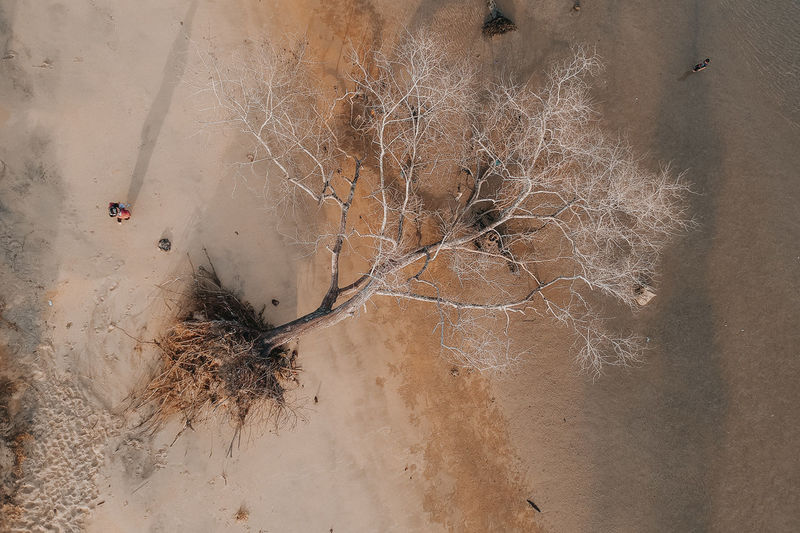 shadow of tree Plant Nature No People Day High Angle View Tree Land Bare Tree Dry Outdoors Branch Tranquility Dried Plant Winter Sand Cold Temperature Close-up Dead Plant Climate Arid Climate