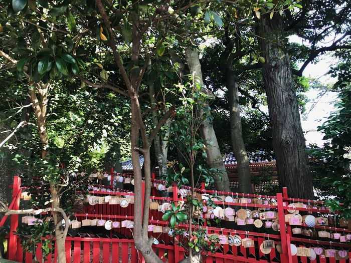 Tree Outdoors No People Nature Leaf Red Beauty In Nature Travel Photography Travel Japan Photography Streetphotography Japanese Style Traveling Trip Nature Architecture Built Structure Green Color