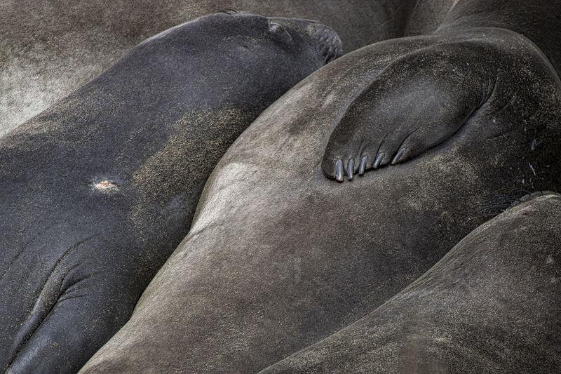 High angle view of animal sleeping