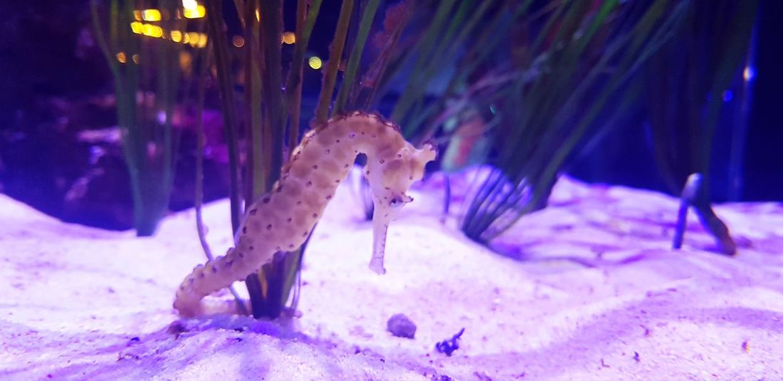 물고기 해마 UnderSea Sea Life Aquarium Underwater Leopard Animals In Captivity Swimming Sea Horse EyeEmNewHere