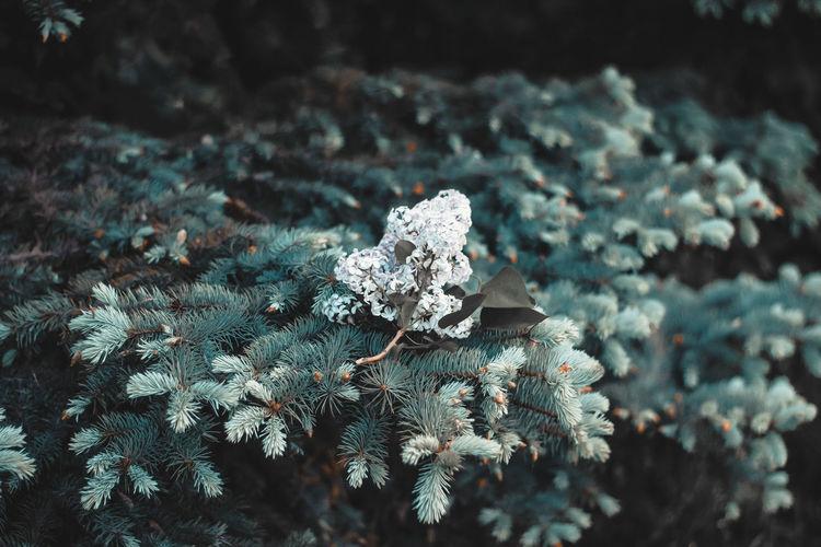 Plant Cold