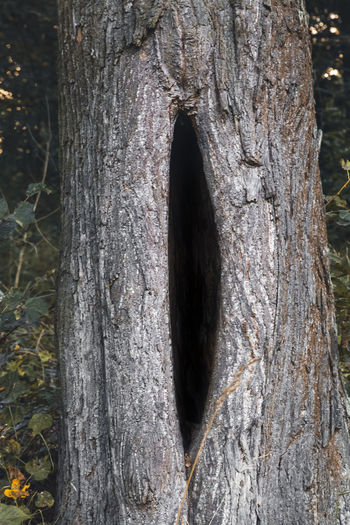 Close-up of hole in tree trunk