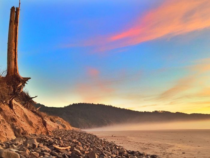 Scenic Landscape Nature Cape Lookout, Oregon Oregon TreePorn Nature Photography Landscapes Landscape_photography Landscape #Nature #photography Tree Trees Sunset Beach Photography Beach Rocks Stones The KIOMI Collection