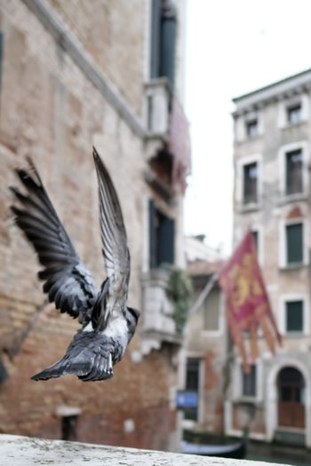 Venezia Italy Flying Bird Spread Wings Flying City Animal Themes Close-up Architecture Building Exterior Animal Wing
