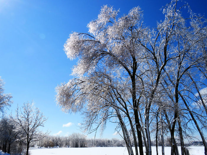 Trees covered of ice shining like diamonds Tree Plant Beauty In Nature Sky Snow Branch Winter Nature No People Scenics - Nature Tranquility Low Angle View Day Cold Temperature Tranquil Scene Growth Bare Tree Non-urban Scene White Color Outdoors Treelined