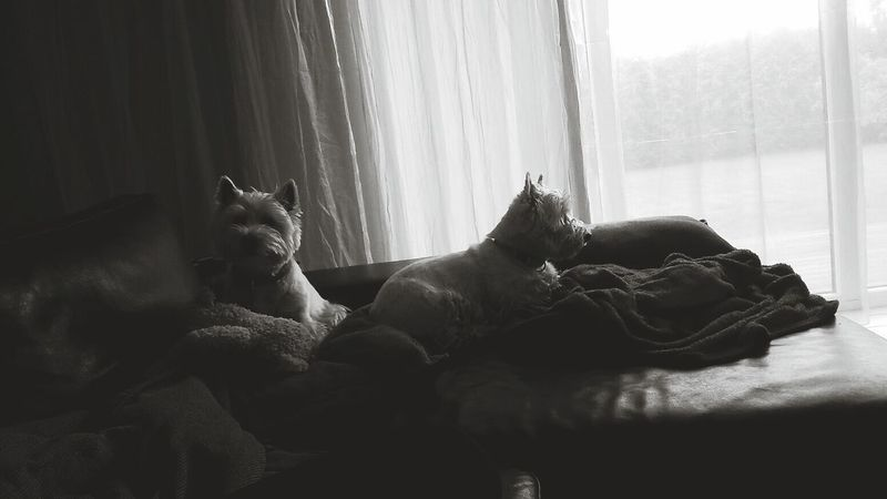 Dogs Bnw Photography Chillin'