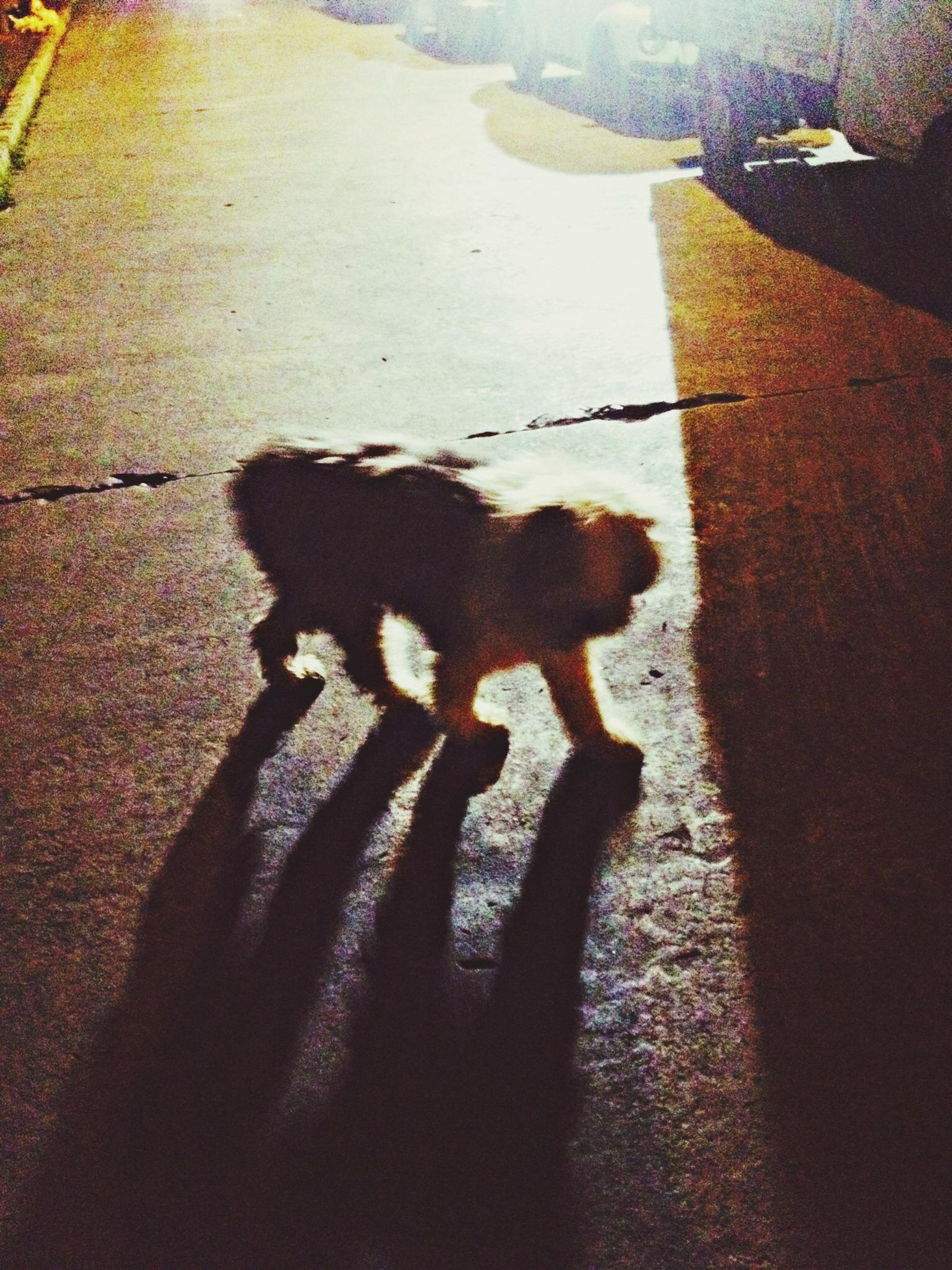 shadow, high angle view, street, focus on shadow, road, sunlight, dog, unrecognizable person, transportation, asphalt, road marking, walking, mammal, domestic animals, outdoors, day, the way forward, men