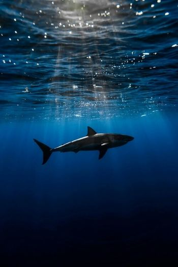 Lovely Photography Nature Amazing View Sunshine Ocean Shark الطبيعة Check This Out Deep Blue