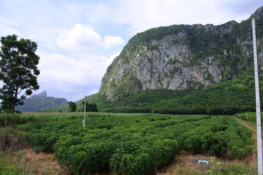 Rock Mountain Agriculture Beauty In Nature Cloud - Sky Environment Garden Green Color Growth Land Landscape Mountain No People Orchard Road Outdoors Plant Scenics - Nature Sky Tapioca Plant Tranquility Tree