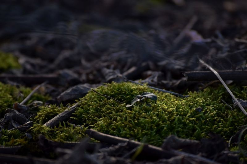 Nature Growth Green Color Moss Close-up Sun Sunlight Contrast First Eyeem Photo EyeEmNewHere