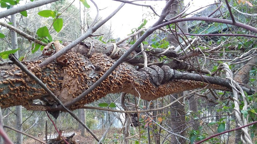 Perspectives On Nature TwistedWood Twisted Tree Trunk Nature Forest Close-up No People Complexity