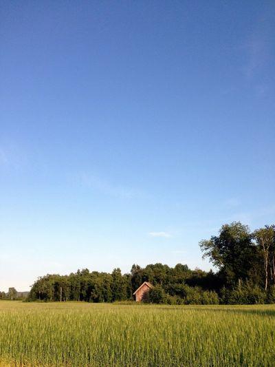 Crop of in a field