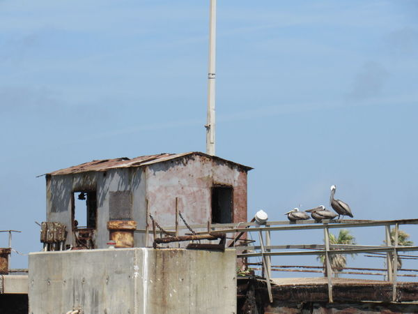 Abandoned Places Alantic Ocean Blue Skies Brown Pelicans Cement Block Grey Color Metal And Wood Old Building  On An Island