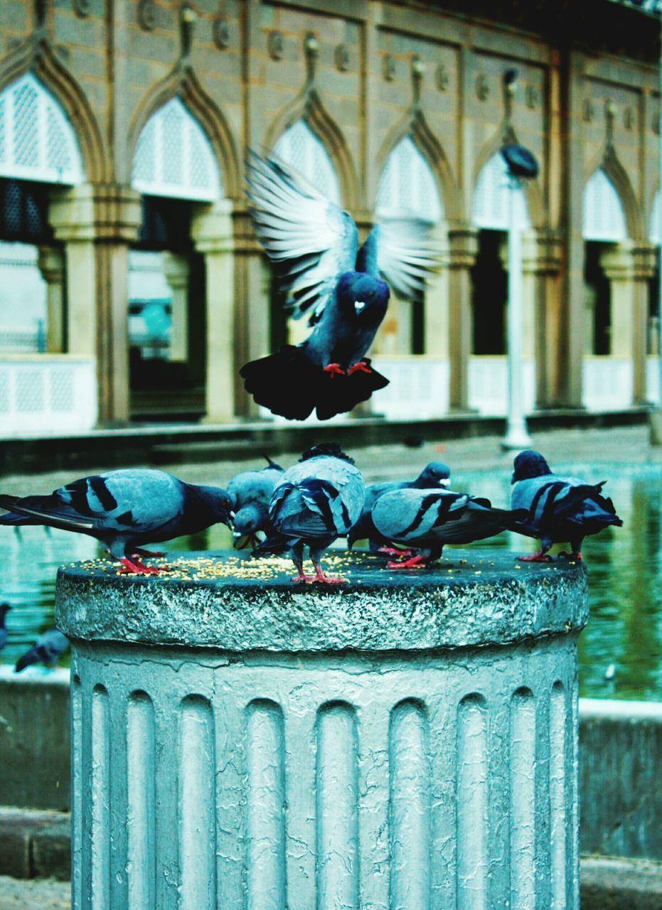 VIEW OF BIRDS IN BUILDING