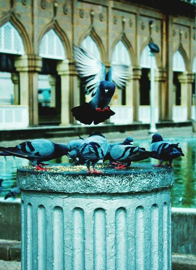 View of pigeons on fountain against building