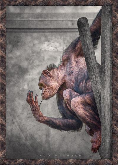 Digital Art - Hanging Around Animal Ape Around Art Artful ArtWork Colored Colorized Coloured Colourized Design Different Digital Digital Art Fine Fine Art Germany Hanging Menhard Monkey Skin Style Uncommon  Zoo