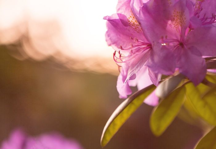 Evening hours ... 💛 Happiness Life Happytime Canon Garden Outdoors Nature Photography Naturelovers Homeandgarden Flowerphotography Flower Rhododendron