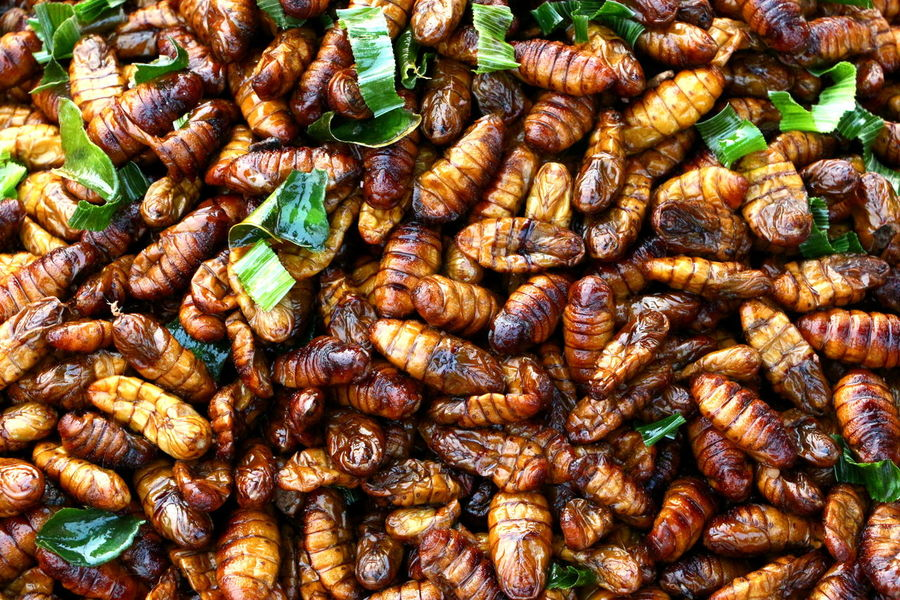 An exotic delicacy Delicacy Delicious Exotic Food Food Food And Drink Fried Insect Fried Insects Healthy Eating Ready-to-eat Street Food Tasty Thai Food Worm My Best Travel Photo