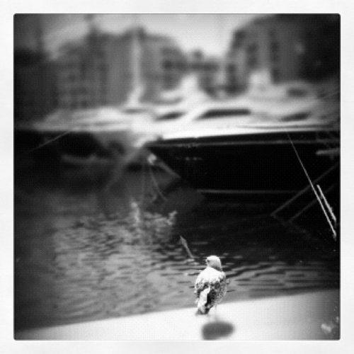 Reminiscing mew Iphonesia Iphoneonly @olabas Olabaspimped Bird boat pier