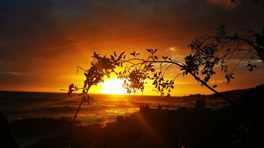 Taghazout sunset Taghazout Taghazout Beach Morocco Sunset Tree Sky Sun Plant Orange Color Nature Beauty In Nature Silhouette Tranquility Landscape Sunlight Environment Scenics - Nature No People Outdoors
