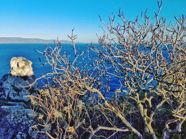 Blue Nature No People Outdoors Sky Day Animals In The Wild Clear Sky Sea Beauty In Nature Large Group Of Animals Flying Winter Water Bird Horizon Over Water Animal Themes Scenics Cloud - Sky Lost In The Landscape Plant Freshness Cagliari-Nature Cagliari, Sardinia Italy Landscape