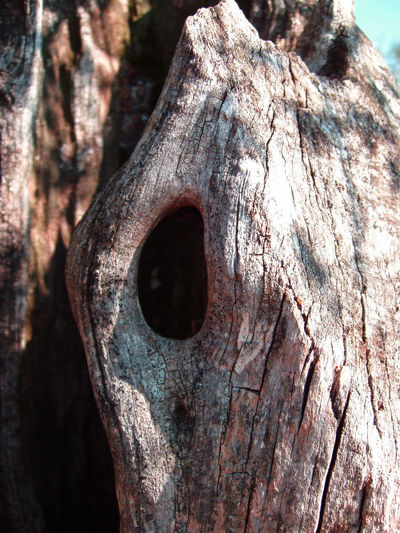 Animal Nest Bark Barks Of A Tree Black Hole Close-up Cortex Cortex Tree Cracks Day Hole Hollow Shaft Hollow Tree Lairs Nature Nature Nest No People Outdoors Tree Tree Tree Trunk Wild