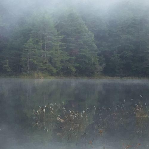 聖湖 Lake Water Plant Tree Reflection Tranquil Scene Beauty In Nature Tranquility
