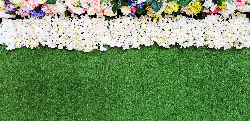 High angle view of white flowering plants on grass
