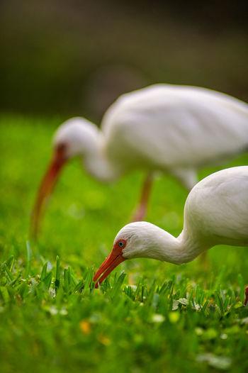 Closeup of bird