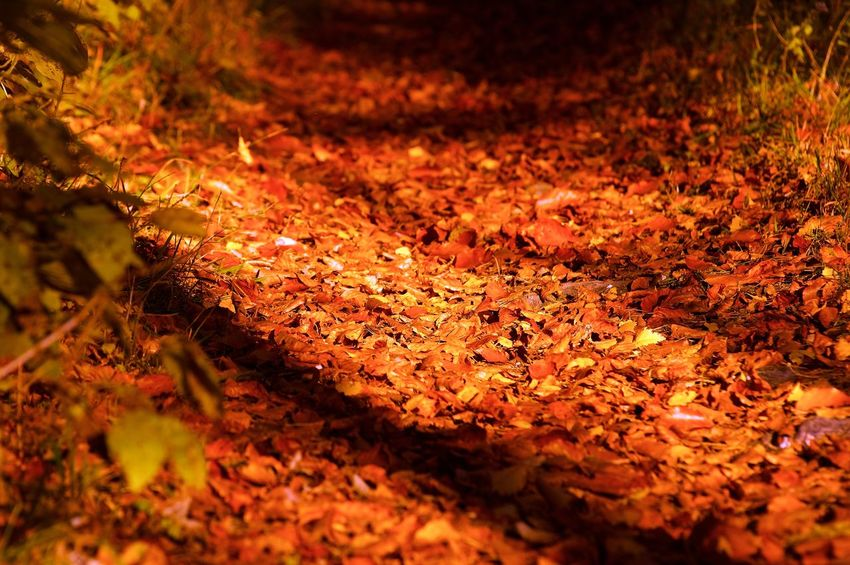 Colorful Autumn Beauty In Nature Day Dry Herbst Landscape Leaf Light Nature Nature Outdoors