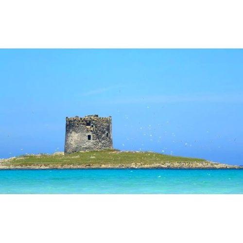 in 2 Wochen nochmal für 3 Nächte da ?☀? Sardegna Stintino Lapelosa Beach italy italia holiday summer