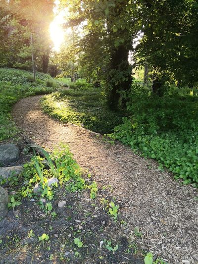 Path in sunny forest Shadow Sunlight High Angle View Field Tree Sun Grass Green Color Flower Head Blooming Stamen Streaming Growing Leaves Green Leaf Vein Sunbeam Plant Life Fragility Shining Grassland Long Shadow - Shadow Dirt Track Focus On Shadow Woods Pathway Walkway Narrow Long Sunrays
