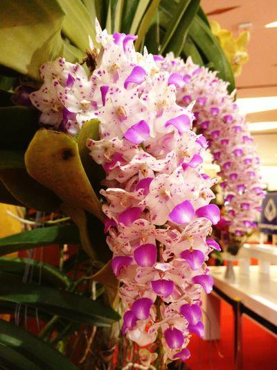 ทรงพระเจริญ Thailand Orchid Flower