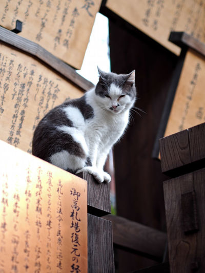 Zen Cat Cat Day Domestic Cat Fat Cat Japanese Cat Mammal No People One Animal Peace Pets Temple Zen